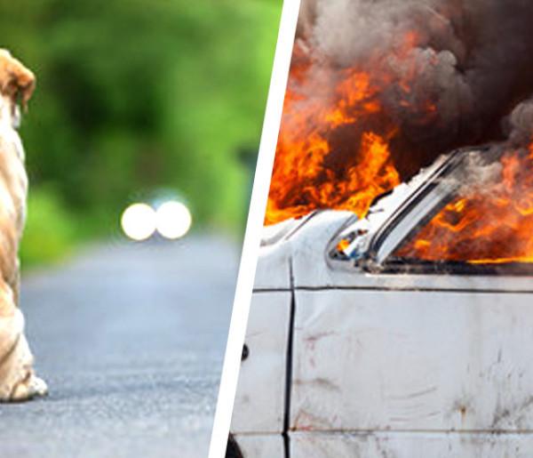 Wypadek w Łosicach - ominął psa, rozbił samochód-27070